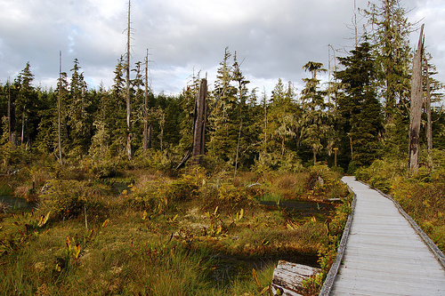 Boardwalk on the ecological reserve, Alert Bay
