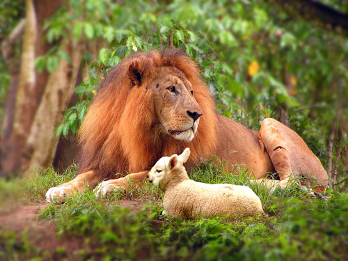 lion_and_lamb