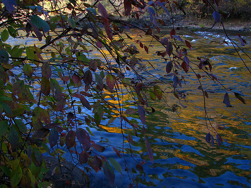 Autumn afternoon, Sproat River