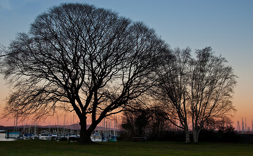 Oak Bay Marina trees against the sunset